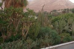 news 2 israel ein gedi kibbuz